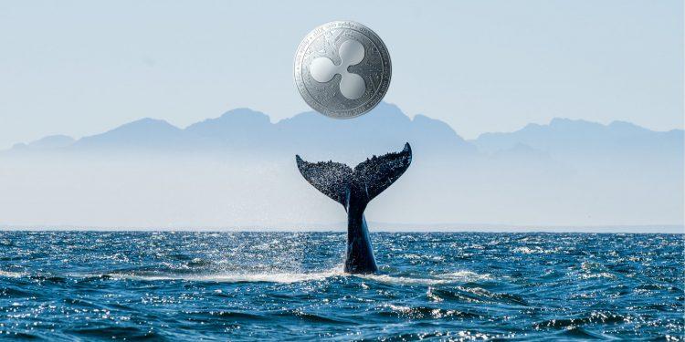 Son Dakika: Ripple Balinaları 97,3 Milyon XRP Taşıdı!