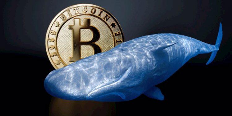 Bitcoin Balinası, 34 Milyon Dolar Değerinde Bitcoin'i 2012 Yılından Beri İlk Kez Hareket Ettirdi